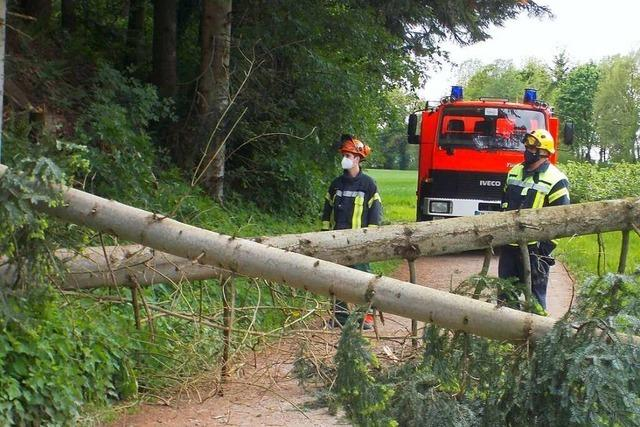 Sturmböen am Vatertag – Denzlinger Wehr muss vier Bäume entfernen