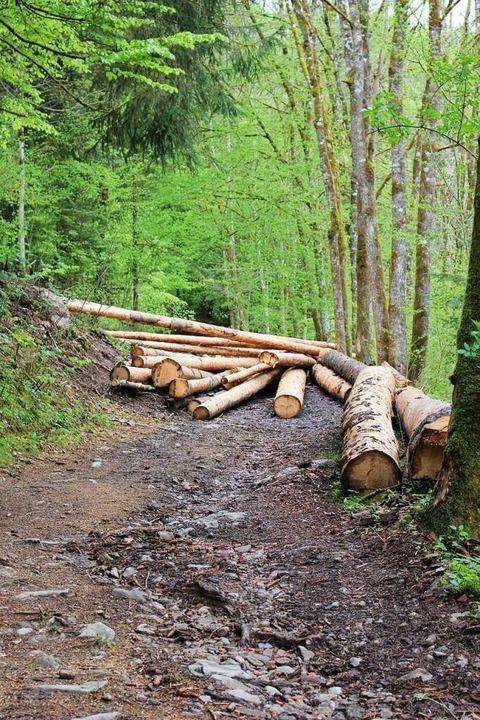 Der Waldweg ist mit Langholz versperrt – betreten verboten.  | Foto: Martin Klabund