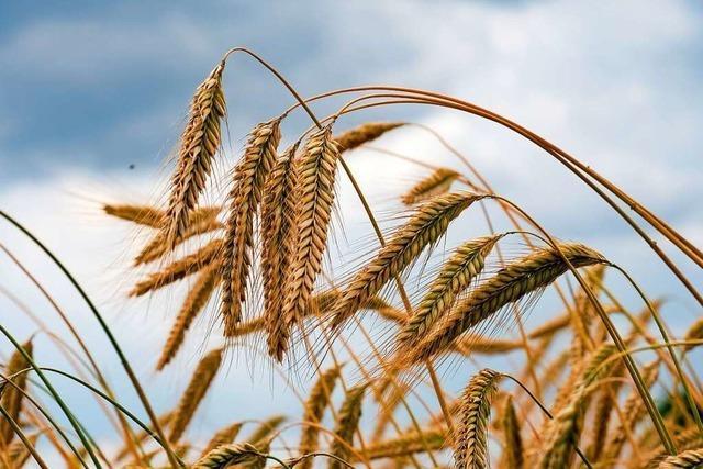 Getreidehändler sehen