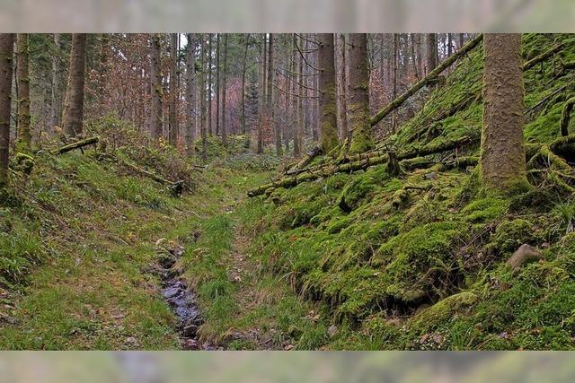 Freiämter Wald ist gut gerüstet