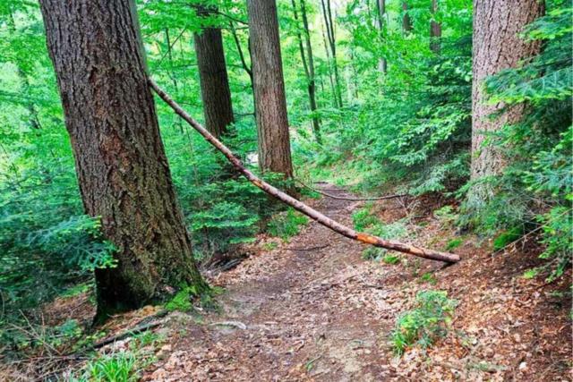 Unbekannte stellen erneut Fallen auf Mountainbike-Strecken