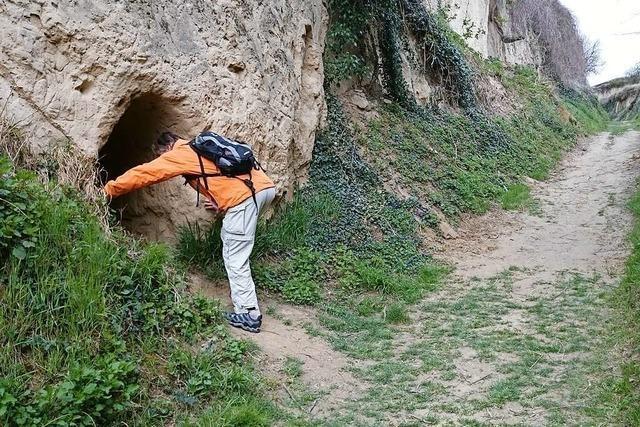 Eine Wanderung zu den Lösshohlwegen in Bickensohl