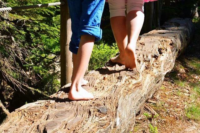 Vörstetten bekommt einen Wald- und Naturkindergarten