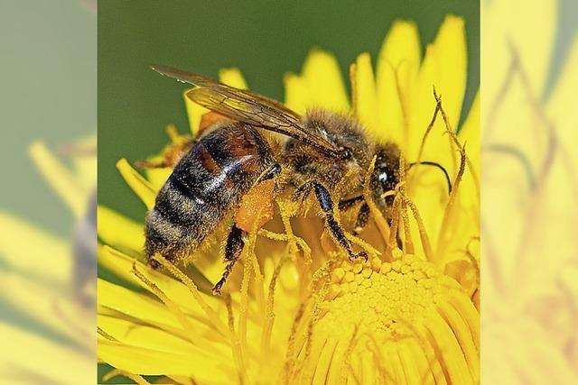 Ohne Bienen keine Ernte