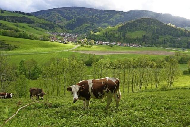 Sattes Grün und Panoramablick
