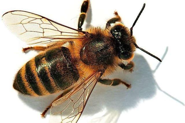 Ein Start-up vom Dinkelberg fertigt Bienenwachstücher
