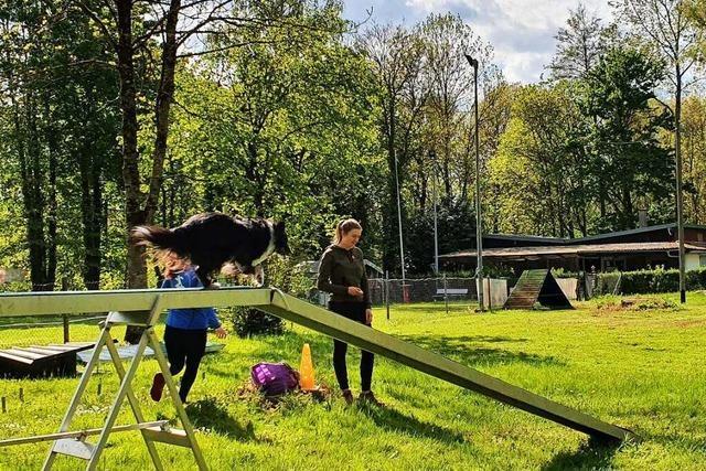 Warum Dietenbach den Hundesport in Gundelfingen rettet