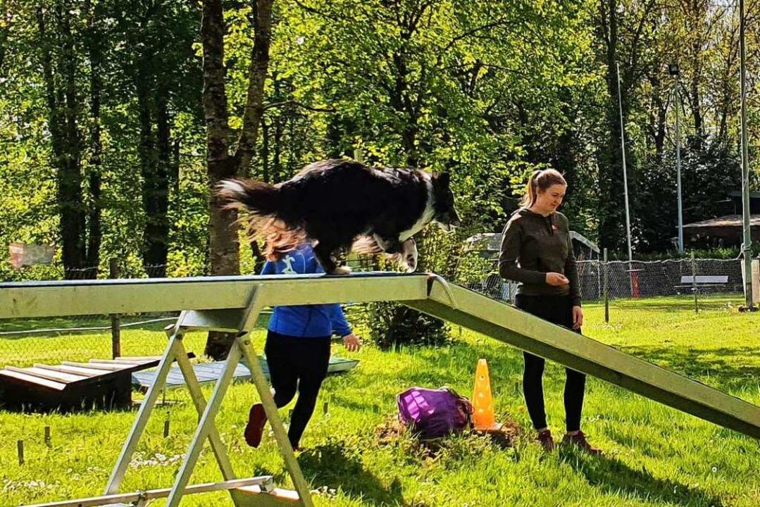 Künftig trainieren die Hundesportler aus Freiburg in Gundelfingen.  | Foto: Babett Höfflin