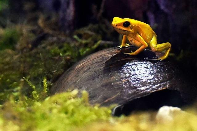 Giftige Tiere bevölkern das Freiburger Museum Natur und Mensch