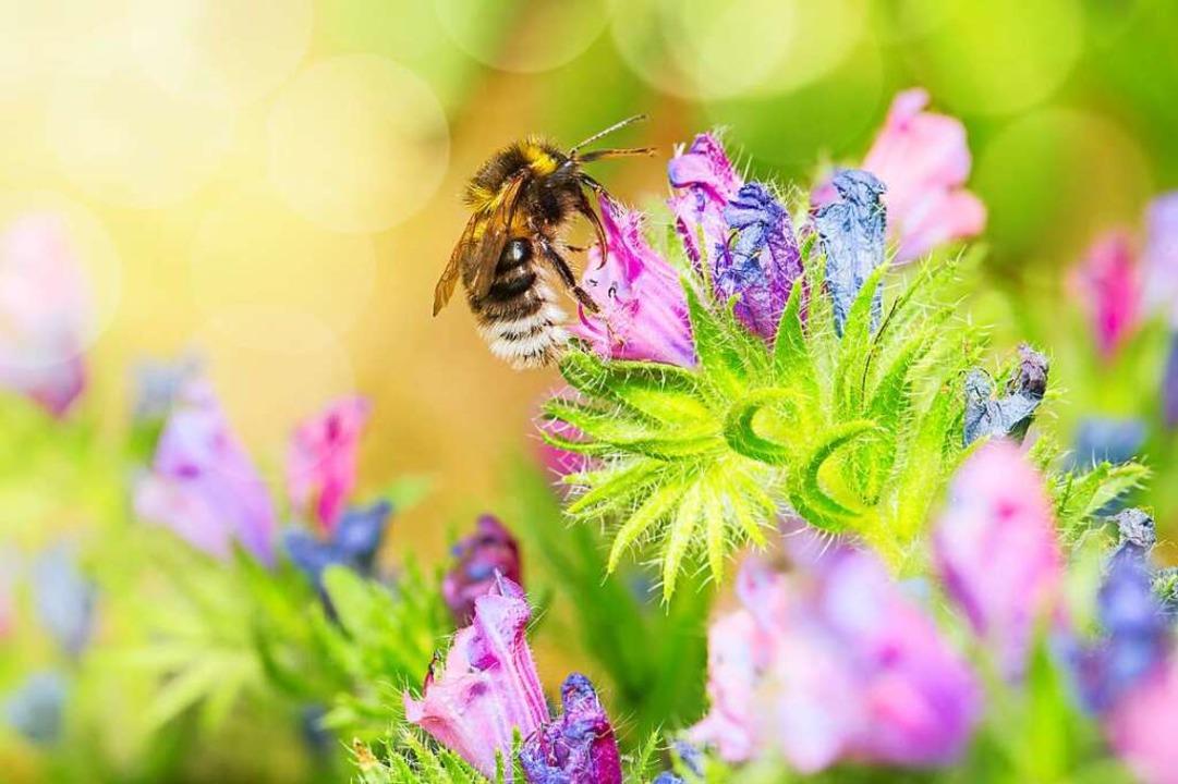 Ein bunter Futtertrog für eine Biene  | Foto: Sabine Dietrich