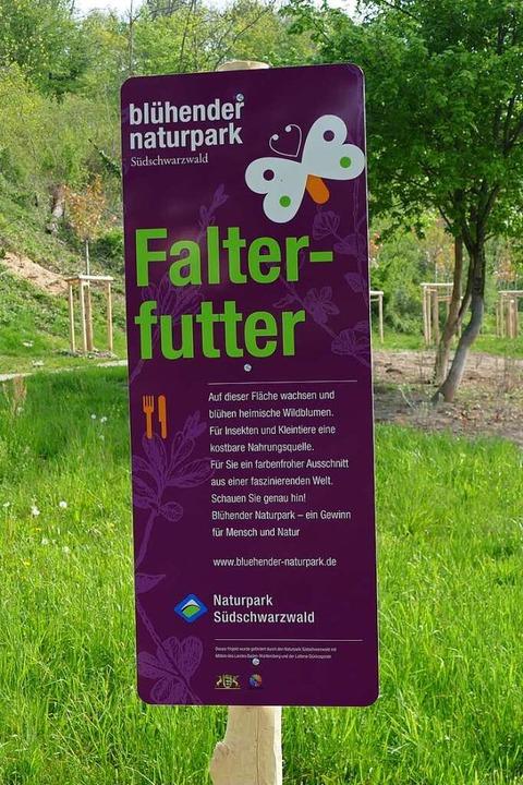 Insekten willkommen: Auf Freiflächen u...en, wo sich die Futtergründe befinden.  | Foto: Verena Pichler