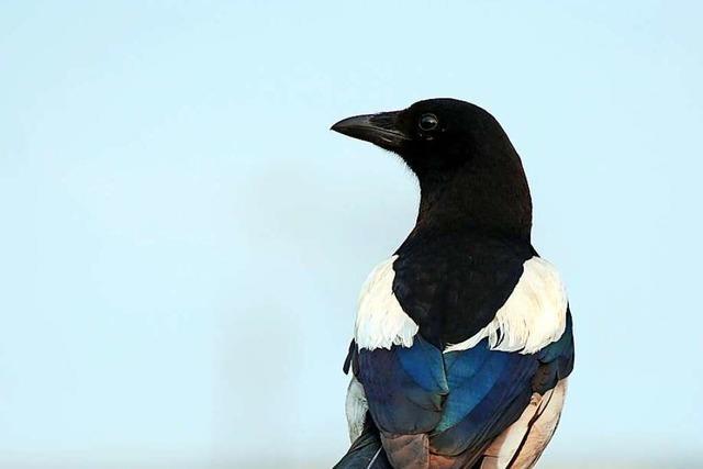 Unbekannte haben Vögel im Heitersheimer Gewerbegebiet getötet