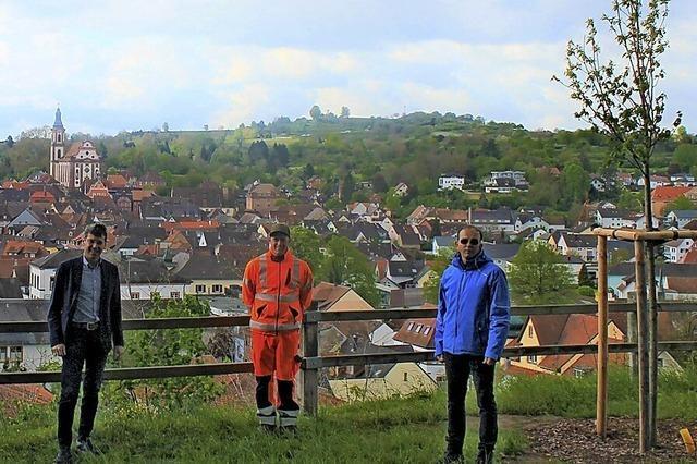 Neue Bäume in Ettenheim und in den Ortschaften