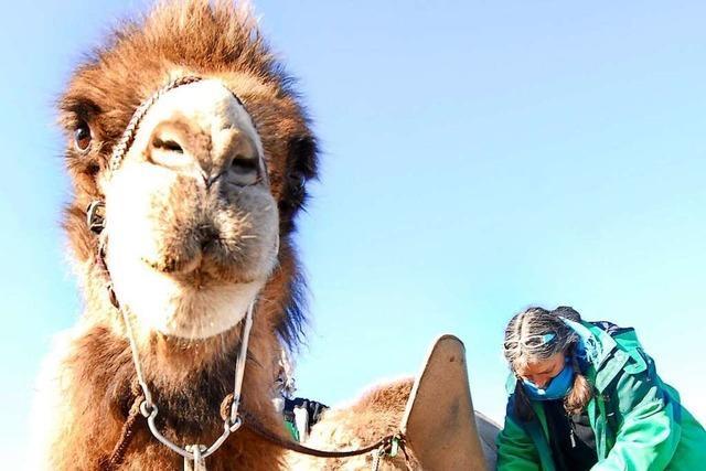 Auf dem Mundenhof kann man Kamelreiten