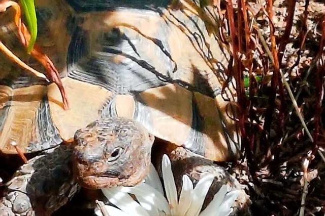 Schildkrötenmutter: