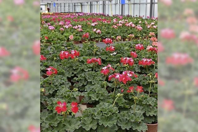 Blütenpracht im Wartestand