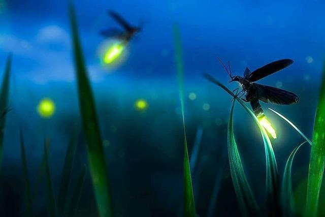 Neonlichter fliegen durch die Nacht