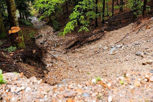 Schwarzwald-Bach mit Bauschutt vergiftet – Staatsanwalt ermittelt