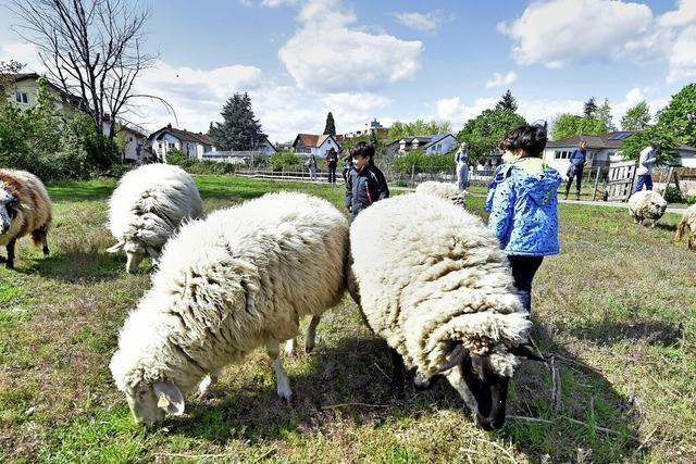 Bauernhoftiere in Freiburg werden von Neubauten bedrängt