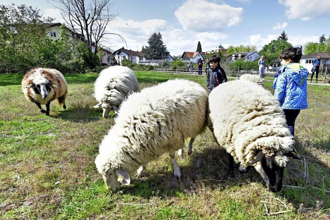 Landleben in der Stadt: Für Kinder sin...chafe in Betzenhausen eine Attraktion.    Foto: Michael Bamberger
