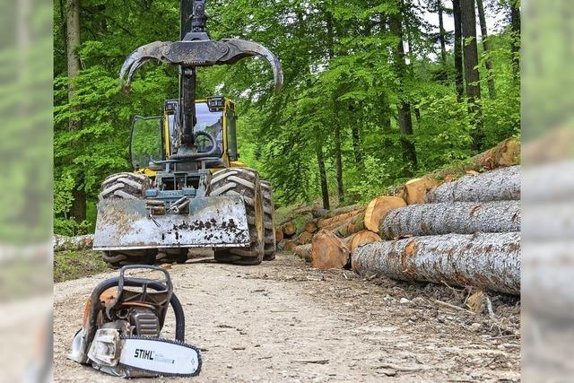 Waldverjüngung kommt gut voran