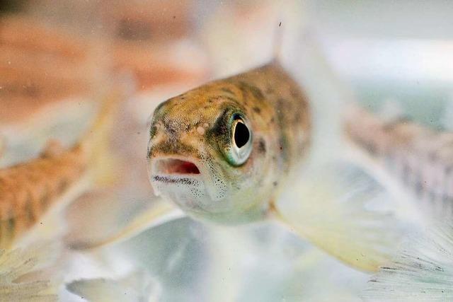 Fluch und Segen der Aquakulturen