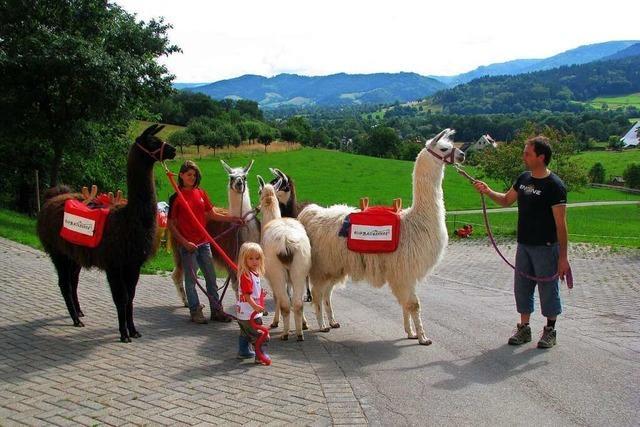 Auf dem Ruhbauernhof in Dietenbach geht's mit Lamas auf Tour