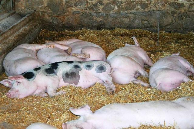 Auf dem Baldenwegerhof in Wittental warten viele Tiere auf Streicheleinheiten