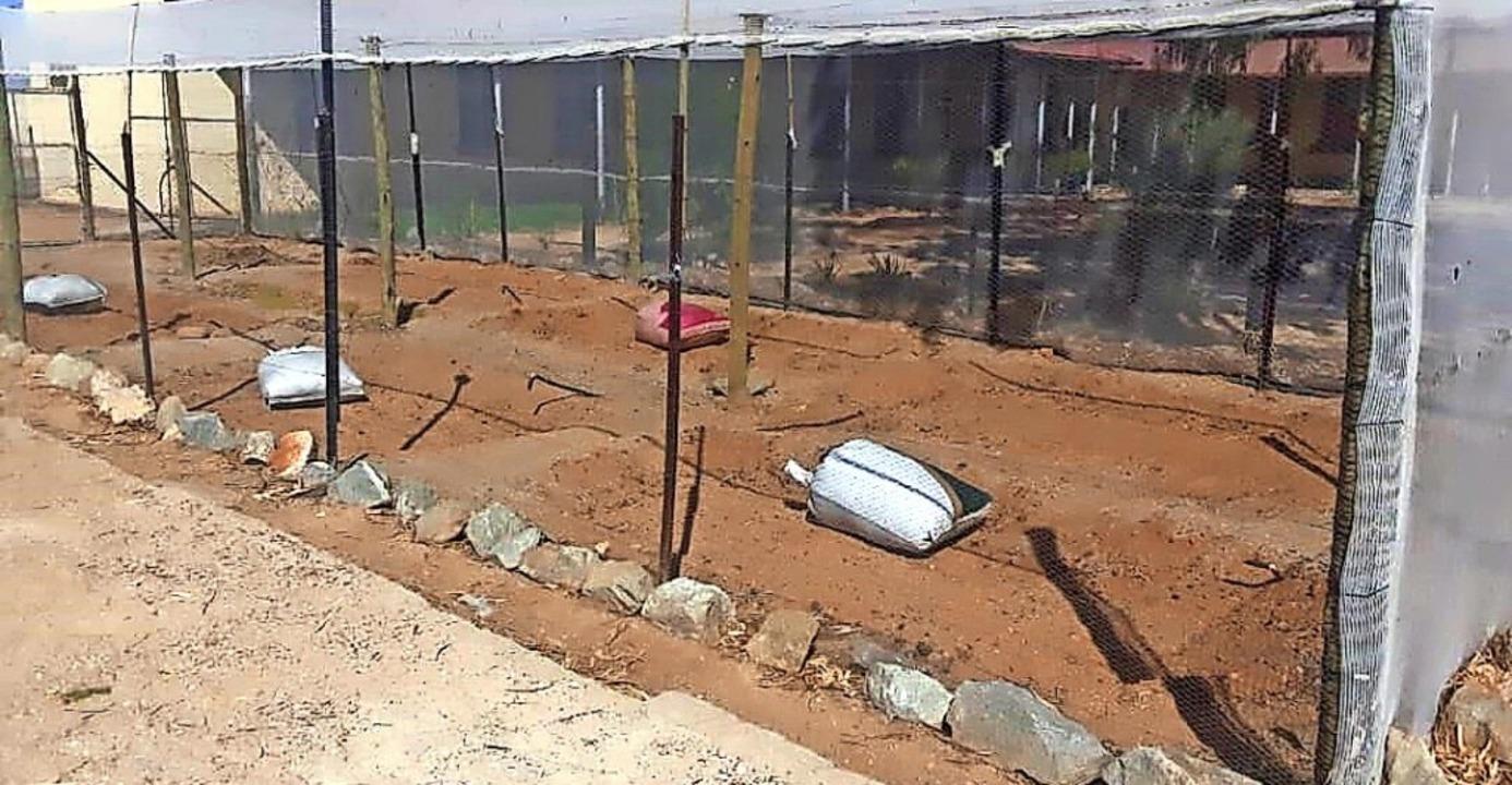 <BZ-FotoAnlauf>Namibia-Spenden:</BZ-Fo...chützt, ein Zaun soll gezogen werden.     Foto: privat