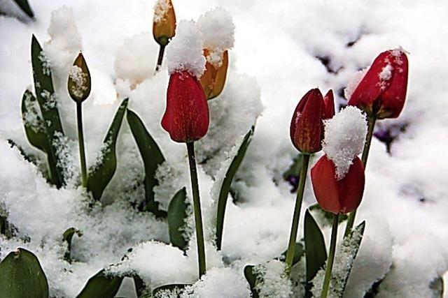 In Bad Säckingen gab's den kältesten Mai seit 1997
