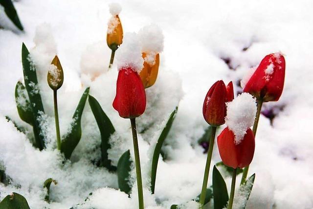 So kalt war der Frühling an der Schwörstädter Wetterstation lange nicht