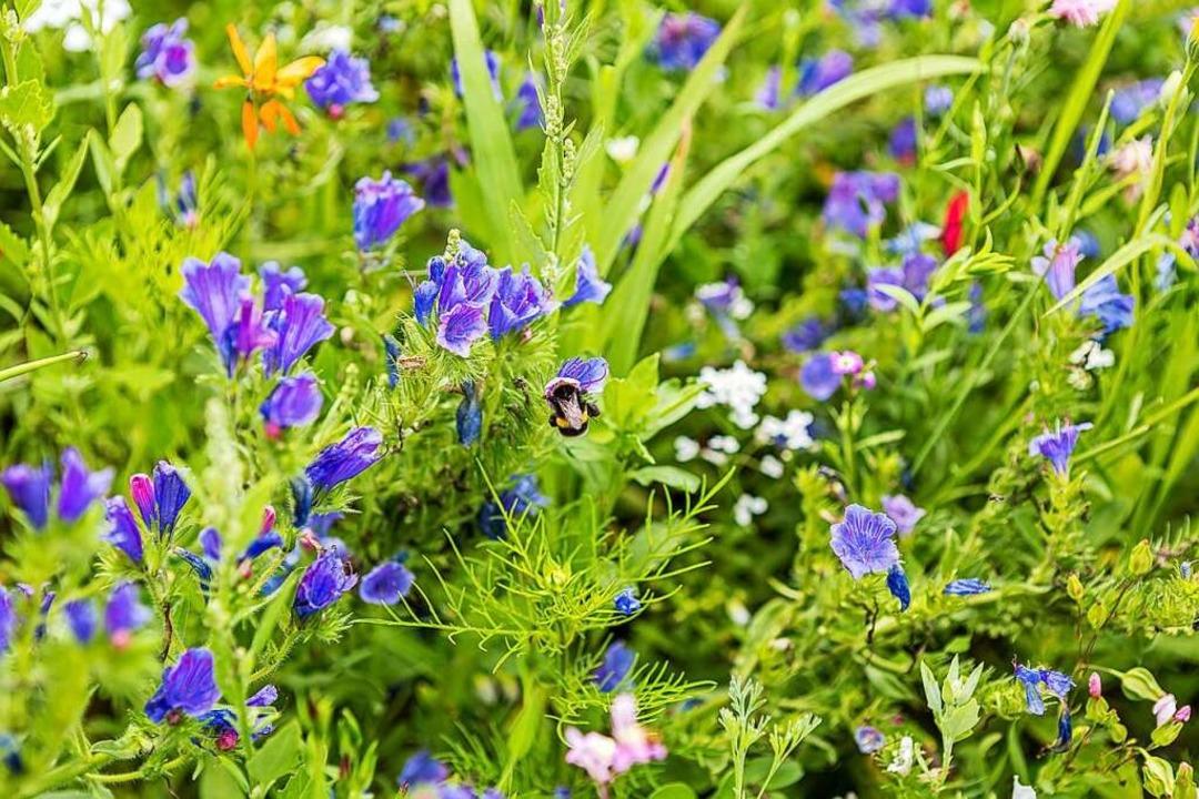 Tolle Blumen und Pflanzen  | Foto: Carlotta Huber
