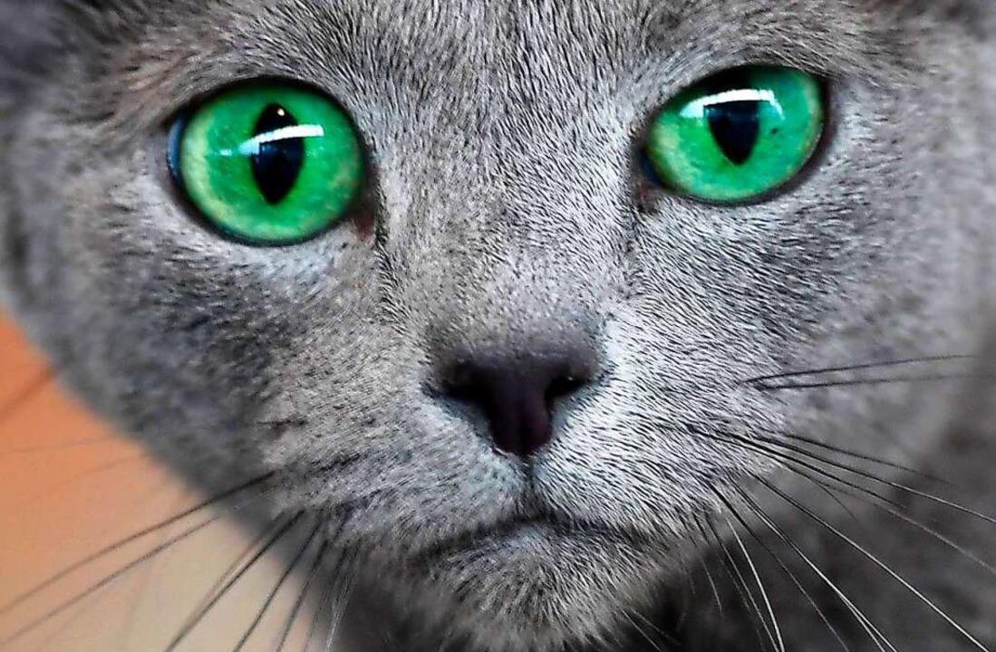Katzen machen das Leben in Pandemiezeiten besser.     Foto: Martin Schutt