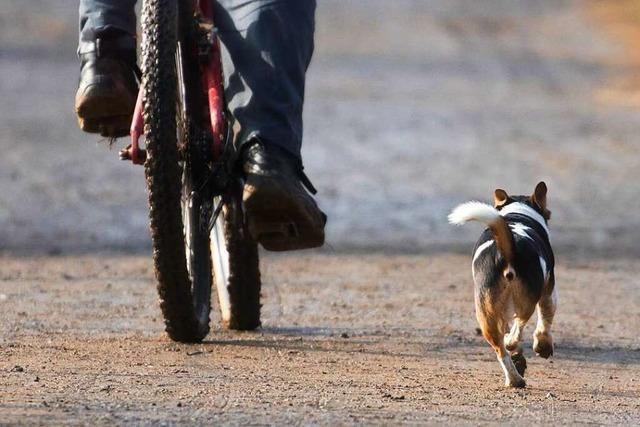 Radfahrer wird nach Streit mit Hundehaltern umgeschubst