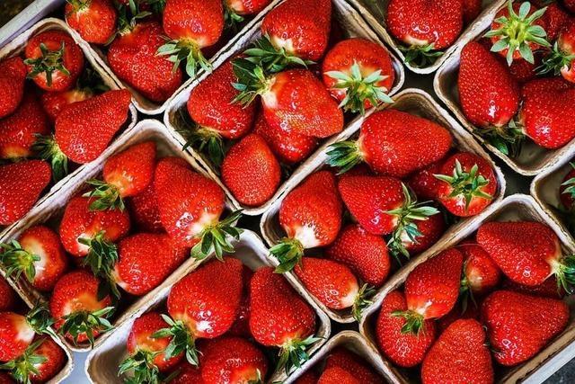 Interview: Mal mit Erdbeeren einen Flammkuchen machen