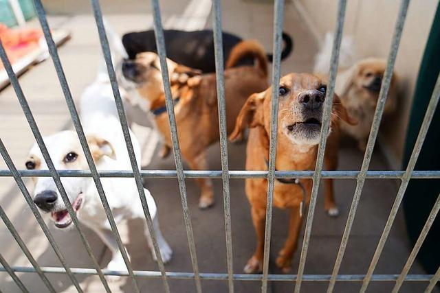 Experten fürchten, dass jetzt die Tierheime wieder sehr voll werden