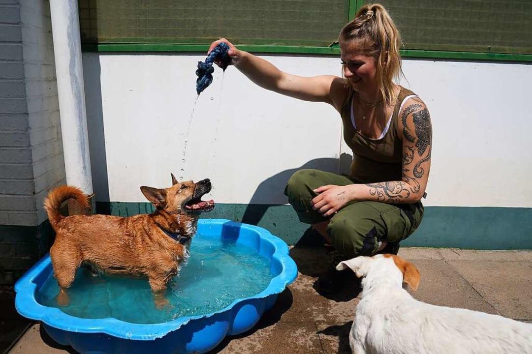 Eine Tierpflegerin spielt in einem Hamburger Tierheim mit einem Hund.  | Foto: Marcus Brandt (dpa)