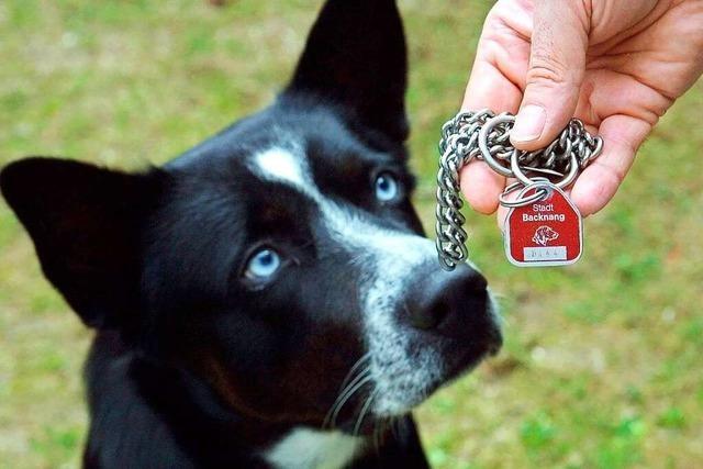 Hundesteuer steigt in Meißenheim um zehn Prozent