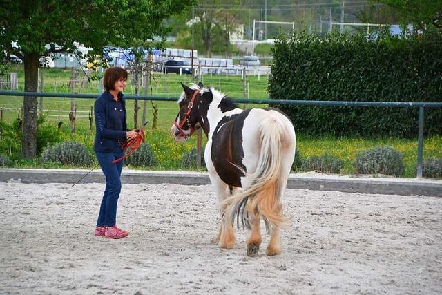 In Buchholz helfen Pferde dabei, Trauma und Krankheiten zu überwinden