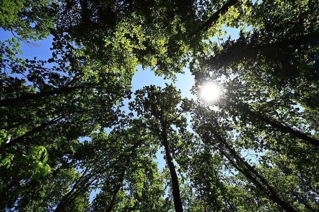 Der regenreiche und kühle Frühling war gut für den Wald