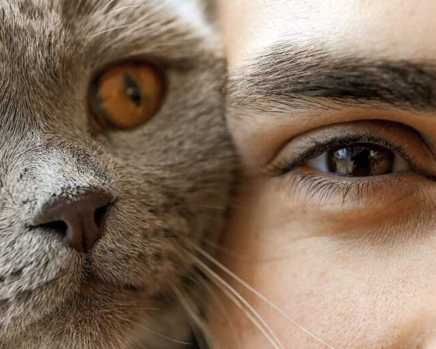 Warum haben wir Menschen kein Fell wie Katzen oder Orang-Utans?  | Foto: Pixel-Shot  (stock.adobe.com)