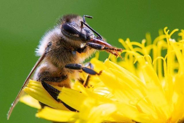 Zusätzlicher Ausgleich für Bauern für Insektenschutz