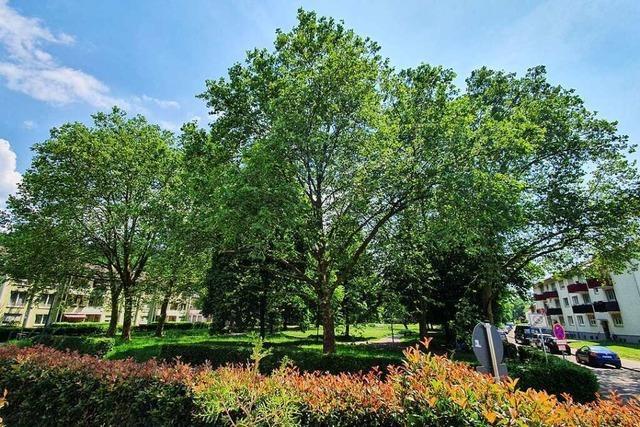 Lahr hat knapp 15.400 Bäume – 150 davon sollen gefällt werden