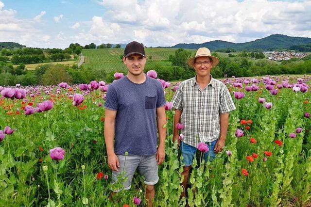 Familie Feißt baut Blaumohn an – mit Sondergenehmigung und als einige der wenigen bundesweit