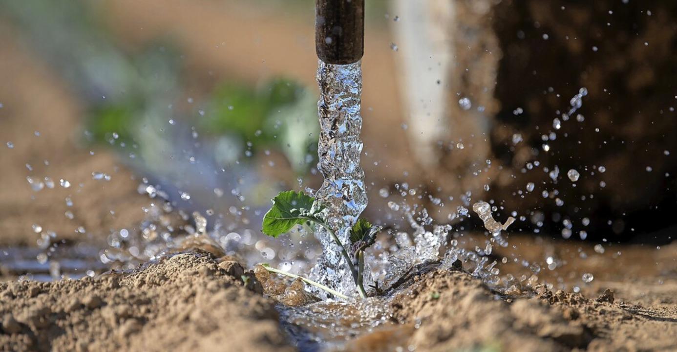 Trockenheit macht auch den Landwirten im Schwarzwald mehr und mehr zu schaffen.  | Foto: Sebastian Gollnow (dpa)