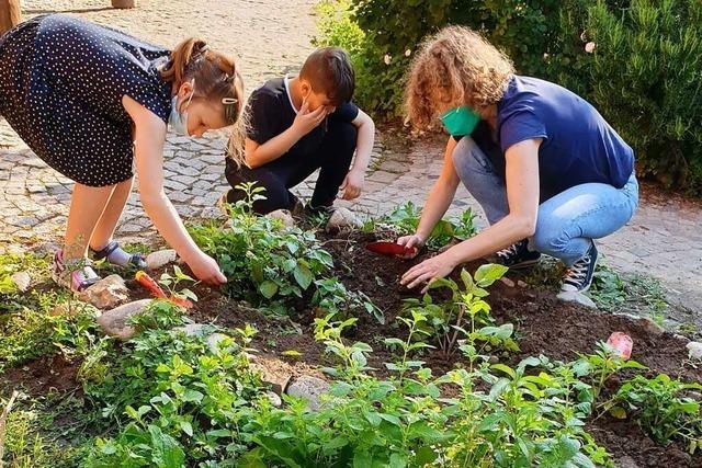 In Waldkirch lernen Schüler der Kastelbergschule, wie man Gemüse anbaut