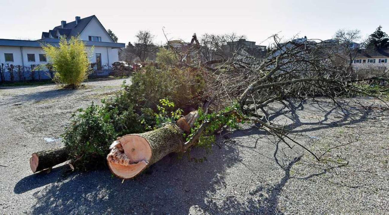 Das schnelle Fällen von Bäumen im Quar...nde Februar hat viele Anwohner empört.    Foto: Michael Bamberger