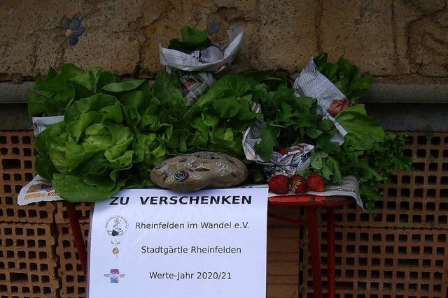 Der Gemeinschaftsgarten in Rheinfelden verschenkt Salat