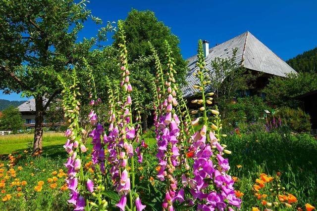 Wettbewerb: Wer hat den schönsten Naturgarten?