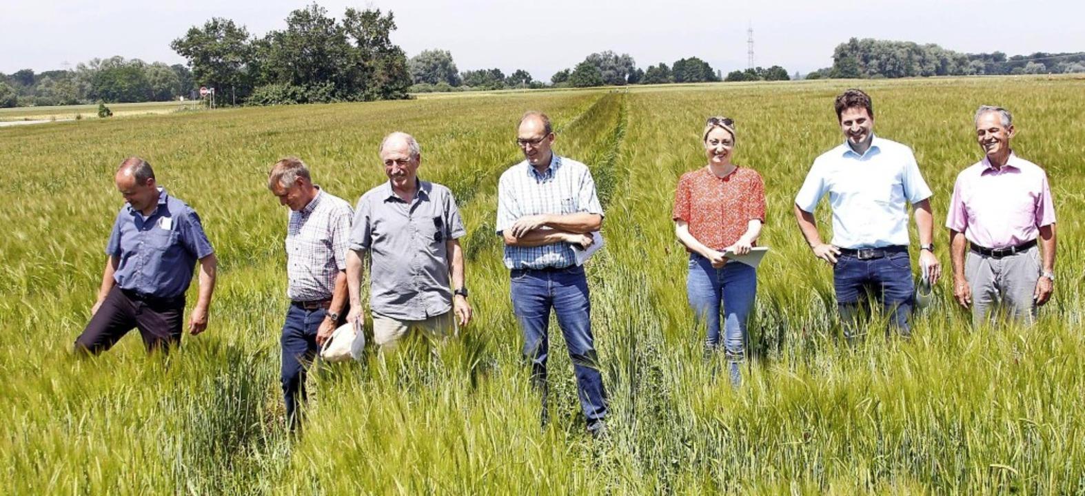 Teilnehmer der Besichtigung der Braugerstefelder von Heinz Hahn in Kürzell   | Foto: Heidi Fößel